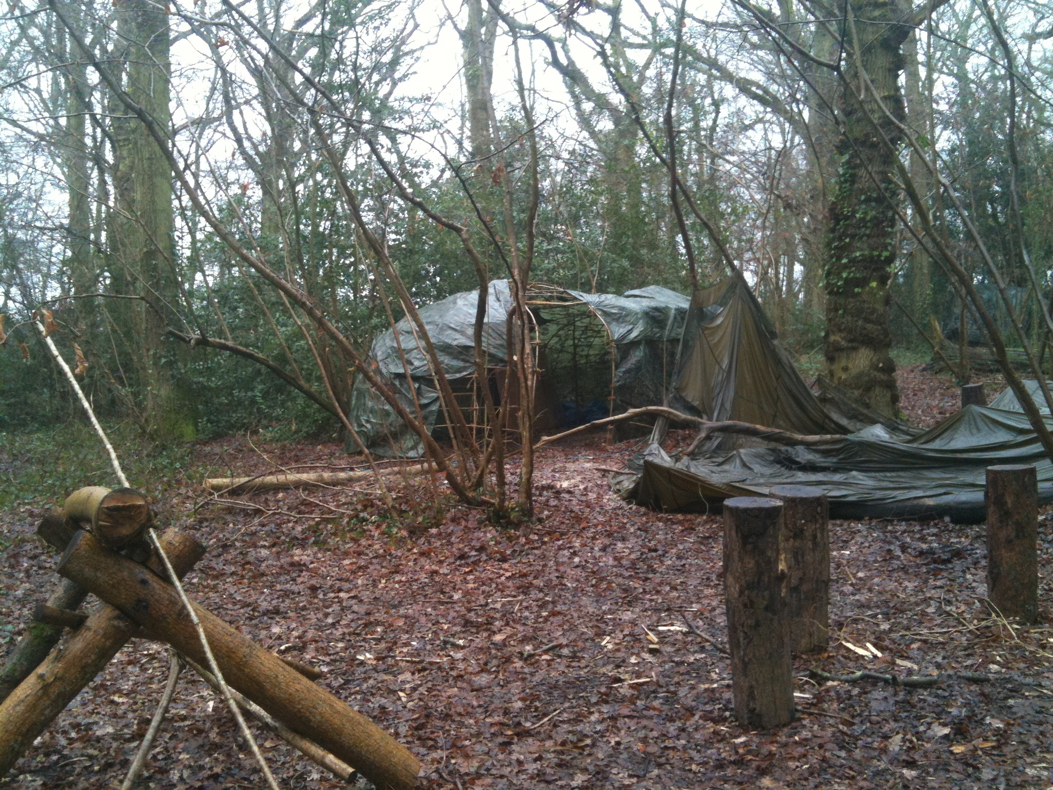 Our Woodland Camp